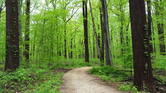 rừng lá xanh xanh