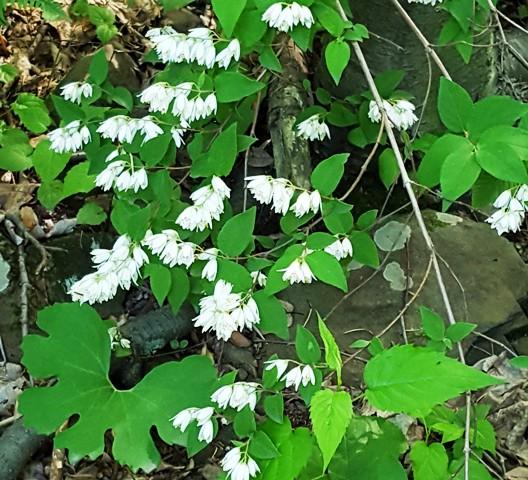 hoa dại màu trắng trong rừng