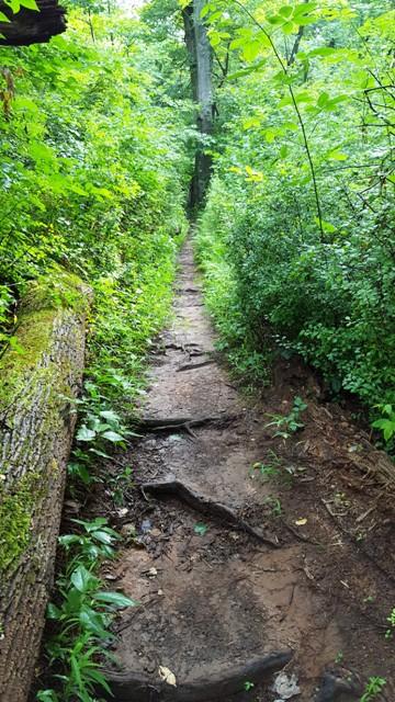 Đường hiking trail trở nên nhỏ hẹp