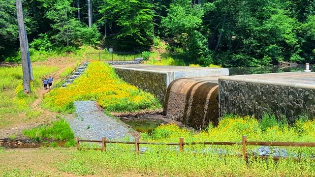 đồng hoa vàng bên cái thác cạn