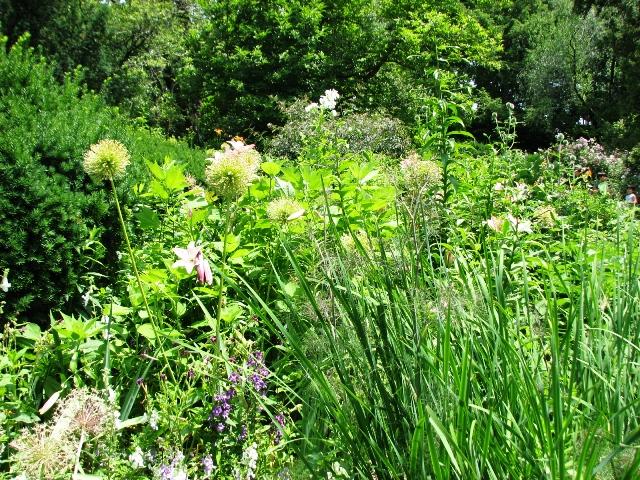 Hoa trong vườn Shakespeare