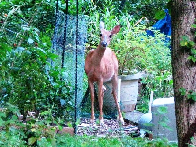 nai bên nhà hàng xóm