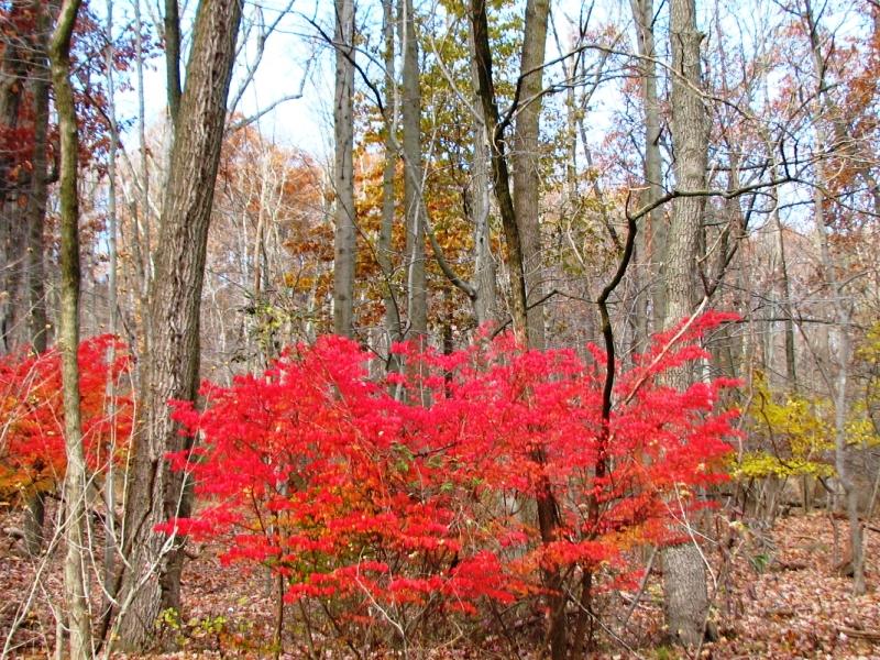 cánh rừng sau nhà hôm nay