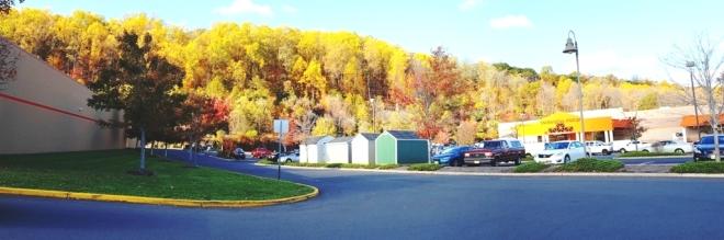 rừng cây trên đồi phía sau Target ở Watchung