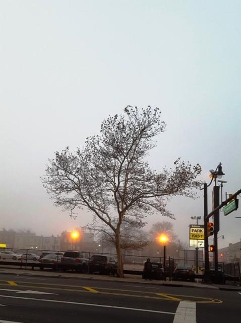 cây mùa đông