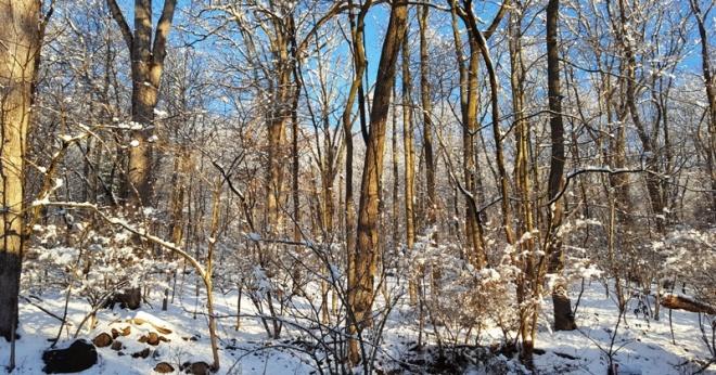 rừng sau nhà sáng hôm nay