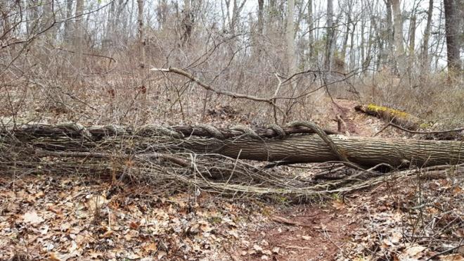 Cây đổ chặn ngang đường mòn trong rừng