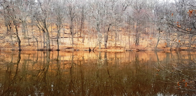 rừng khô soi bóng