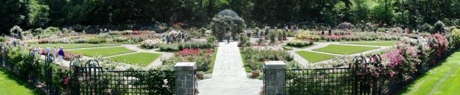 khu vực trồng hoa hồng