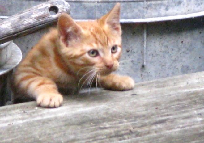 mèo con 2