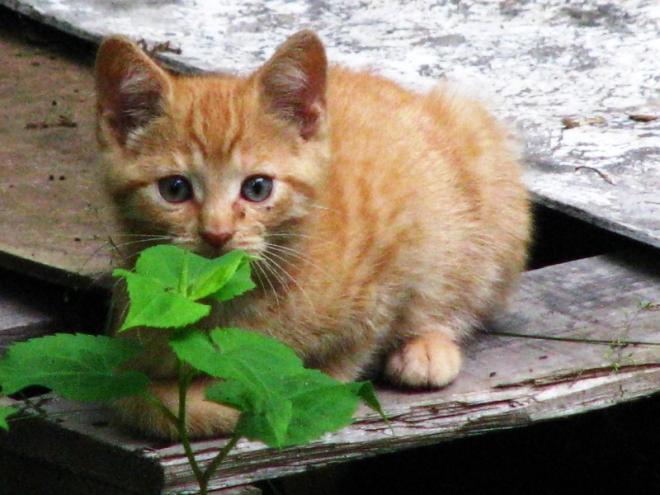 mèo con 3
