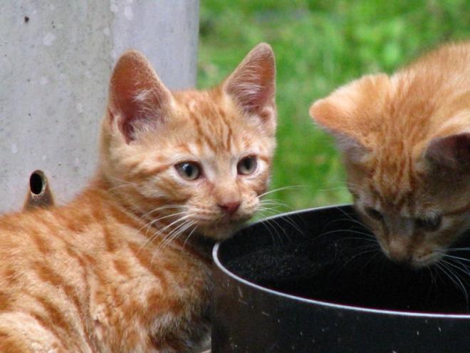 mèo con 4