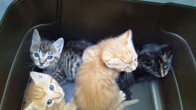 Bốn đứa mèo con