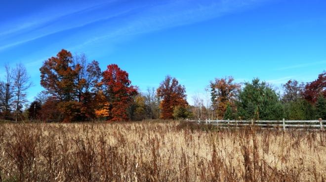đồng cỏ khô ở Duke Farms