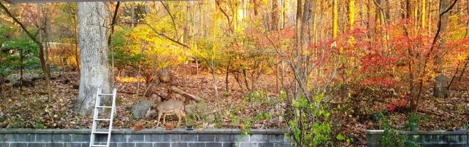 nai trong rừng sau nhà