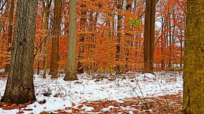 rừng cuối thu