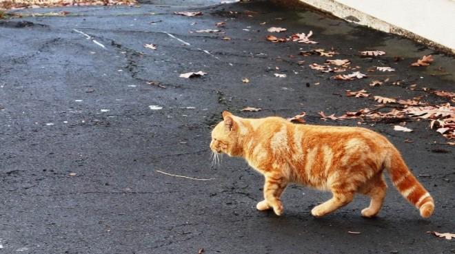 mèo bố xuất hiện