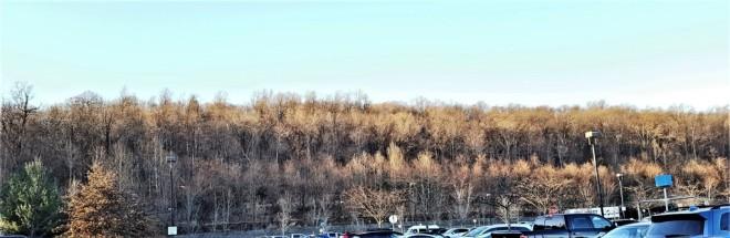 nắng chiều rơi trên đồi