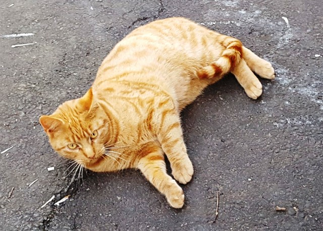 mèo út